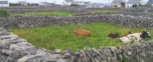 Irish dry stone walls. In prision.