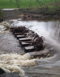 Stepping stones across the Dodder River in Bushy Park Dublin